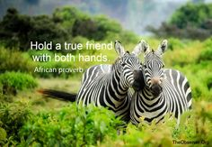 African Proverbs – The Observer