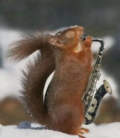 mixing jazz - a squirrel can do it