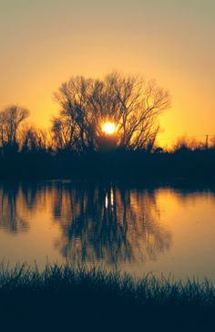 Sunset. Nature. Trees. Forest. Photography by Diana Dragomir