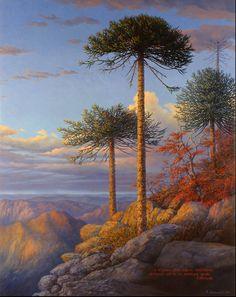 Araucarias Dr Seuss Trees, Fairy Queen, Primitive Folk Art, Tourist Places, Tree Art, Landscape Art, Lovers Art, Mother Nature, Scenery