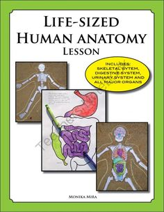 Life Size Human Anatomy Lesson Including Skeletal and DIgestive System from Marine Science And More on TeachersNotebook.com -  (32 pages)  - Students can color and assemble this life sized skeleton, digestive system, heart, brain and lungs. Reference posters, worksheets, and anatomy lesson are included in this download.