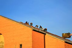 We are one of the leading commercial roofing contractors in Richmond VA. Our flat roofing contractors are highly trained & specialized in commercial roofing systems. Roofing Services, Roofing Systems, Roofing Contractors, Flat Roof Repair, Roof Leak Repair, Roof Restoration, Commercial Roofing, Roof Installation, Cool Roof