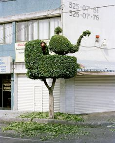 People standing on top of flawlessly pruned trees - Lost At E Minor: For creative people