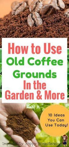 Gardening Vegetables Organic gardening tip. Do you enjoy designing your very own natural vegetable backyard garden? Here are a few environment friendly gardening tips designed to lead you in the right direction. Organic Vegetables, Growing Vegetables, Organic Fruit, Organic Plants, Organic Soil, Growing Tomatoes, Organic Farming, Growing Plants, Organic Baby