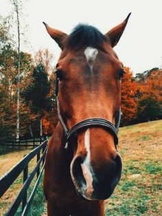 a horse called timber