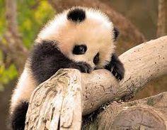 fotos de animales salvajes - Buscar con Google