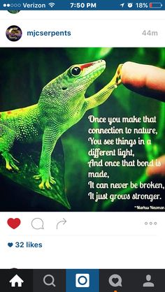 Describes me and my geckos. And unless you have that bond, you won't understand.