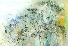 Rachel Mcnaughton - Cow Parsley Seed