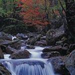 De Irreler Wasserfälle, de Watervallen van Irrel zijn een bekende bezienswaardigheid in de Eifel. Ze liggen in een prachtig gebied, het Natuurpark Südeifel.