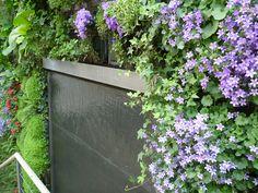 #MurVégétal chez un particulier avec une lame d'eau #Réalisation #RootsPaysages #paysagiste #Yvelines #Châteaufort #Greenwall #UNEP #Plantes #Euphorbe #Campanules #Lamedeau #eau #patio #jardin