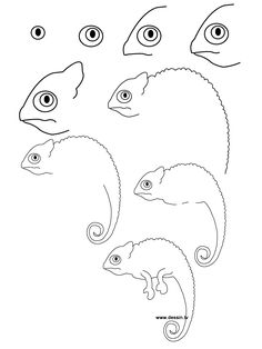 How to Draw Realistic Animals | learn how to draw a chameleon with simple step by step instructions