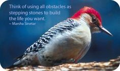 Symbolic Meaning of Woodpecker