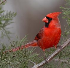 Whether by Fire or Blade, 'Green Energy' is Killing Birds