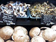 How To Grow Gourmet Mushrooms At Home [Video]   Mommypotamus