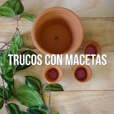 10 cosas inimaginables que puedes hacer con macetas The pots of clay or plastic not only can serve y Cement Crafts, Plastic Pots, Best Beauty Tips, Diy Gifts, Beautiful Flowers, Diy And Crafts, Homemade, Canning, Cool Stuff