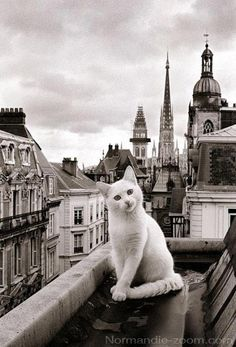 A #cat in #Paris