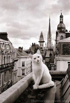 #cat  #Paris