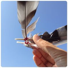 schaeresteipapier: Flugobjekte - Flieger aus Vogelfedern