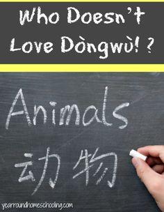 Who Doesn't Love Dòngwù!