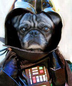 STARWARS dog :)