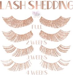 Making magic, one lash at a time. Lash Shedding Cycles & Aftercare