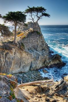 Lone Cypress, Drive, Carmel CA Mom, my sister, and I went on the 17 mile drive when I interviewed at Half Moon Bay. Carmel California, California Coast, California Travel, Pebble Beach California, Oh The Places You'll Go, Places To Travel, Places To Visit, Big Sur, Carmel By The Sea