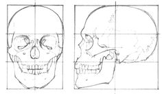 skull-drawing-proportion