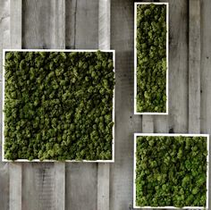 Unusual Home Decor: Fern and Moss Wall Art