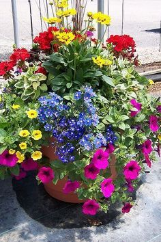 Lovely eye-popping garden container with red, pink, yellow, greens, and blue!