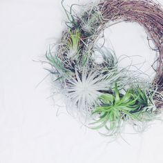 airplants wreath  living wreath  生きるリース