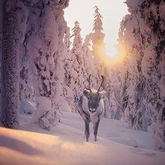 ondergaande zon in de sneeuw