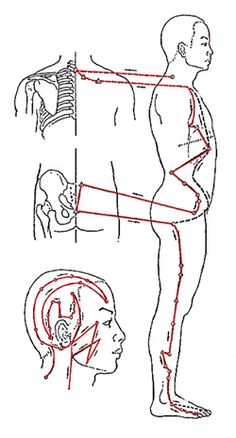 The Gallbladder Meridian - Muscular Strength and Vitality Acupuncture Points Chart, Meridian Acupuncture, Acupressure Points, After Gallbladder Surgery, Gallbladder Cleanse, Gall Bladder Removal, Health Zone, Natural Pain Relief, Traditional Chinese Medicine