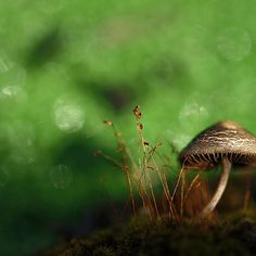 Moss AND fungus in the same photo: Machel Spence photography