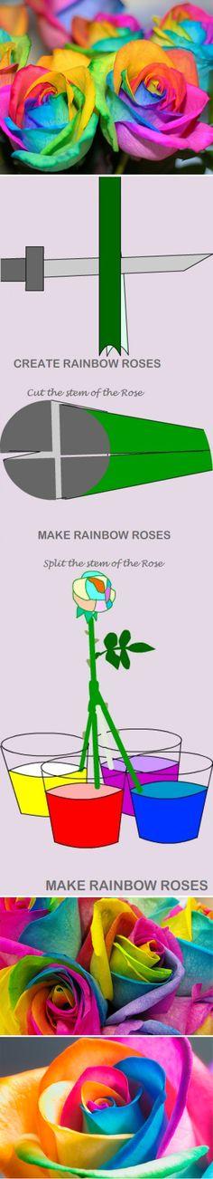 Cómo hacer rosas arcoiris
