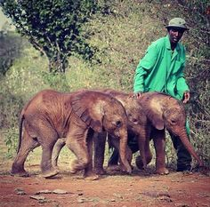 David Sheldrick Wildlife Trust. Top place to volunteer.. hopefully in the following few summers!