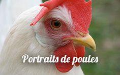 Portraits-de-poules_a44.html