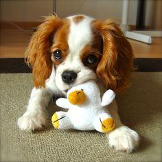 Consejos para una correcta socialización de un cachorro. PerrosAmigos.com