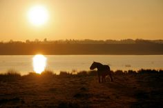 Big Danish Horse in Sunset at Bøllingsø