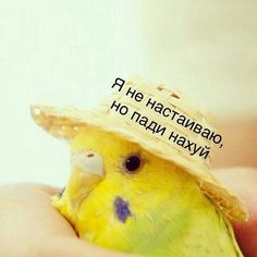 Funny Animal Memes, Cute Funny Animals, Reaction Pictures, Funny Pictures, Cute Backgrounds For Iphone, Hello Memes, Happy Memes, Russian Memes, Funny Mems