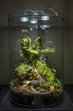 Beautiful DIY Glass Terrarium Ideas (A Guide on How to Make Terrarium & Maintenance) - Reptiles Terrarium Diy, Aquarium Terrarium, Reptile Terrarium, How To Make Terrariums, Glass Terrarium Ideas, Ideas Florero, Paludarium, Indoor Plants, Indoor Water Garden