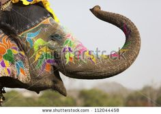 Decorated elephant at the annual elephant festival in Jaipur, India. by David Evison, via ShutterStock