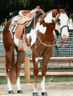 All The Pretty Horses, Beautiful Horses, Animals Beautiful, Cute Animals, Cute Horses, Horse Love, Horse Girl, American Paint Horse, American Quarter Horse