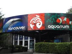 With over amazing aquatic creatures at the Vancouver Aquarium, what will you see today? Stop by and say hi to the adorable sea otters, or come see the mesmerizing jellyfish. Vancouver Seattle, Visit Vancouver, Great Places, Places Ive Been, Places To Go, Attraction, Vancouver Aquarium, British Columbia, Columbia Travel