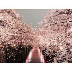 東京23区内でもお花見を楽しめる名所