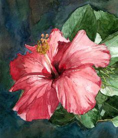 Gallery For > Flor De Maga Drawing