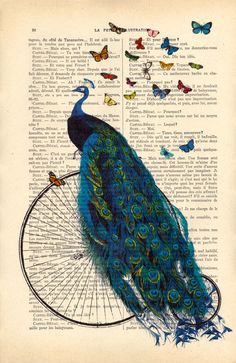 Peacock with butterflies on a penny farthing. Lovely peacock print on an antique…