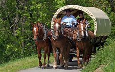 Calèches Nature & Saveurs Zurich, Nature, Horses, Activities, Animals, Switzerland, Naturaleza, Animales, Animaux