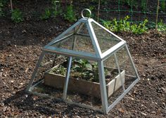 Buy Lidded kitchen garden cloche