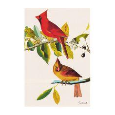iCanvas 'Cardinal' by John James Audubon Painting Print on Canvas