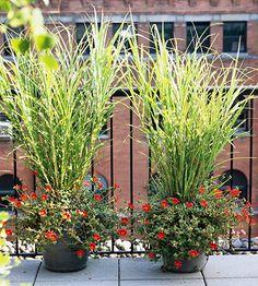 17 ornamental grass...